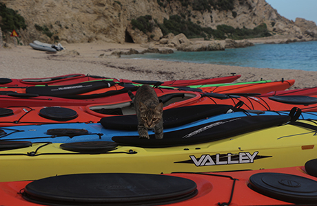 Providing a range of top-notch british sea kayaks